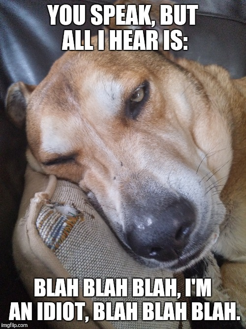 YOU SPEAK, BUT ALL I HEAR IS: BLAH BLAH BLAH, I'M AN IDIOT, BLAH BLAH BLAH. | image tagged in boring,fun,moron,politics,stoner dog,grumpy dog | made w/ Imgflip meme maker