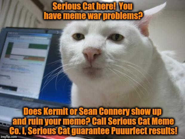 This has been a paid infomercial by Serious Cat Meme Company!  Your Meme War Solutions Company! | Serious Cat here!  You have meme war problems? Does Kermit or Sean Connery show up and ruin your meme? Call Serious Cat Meme Co. I, Serious  | image tagged in serious cat,funny memes,memes,front page | made w/ Imgflip meme maker