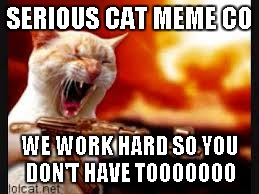 Cat Gone Crazy | SERIOUS CAT MEME CO WE WORK HARD SO YOU DON'T HAVE TOOOOOOO | image tagged in cat gone crazy | made w/ Imgflip meme maker