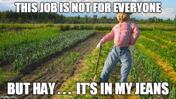 I hope this is a repost :) | THIS JOB IS NOT FOR EVERYONE BUT HAY . . .  IT'S IN MY JEANS | image tagged in scarecrow in field,scarecrow puns,outstanding in his field,funny,memes,you had one job | made w/ Imgflip meme maker