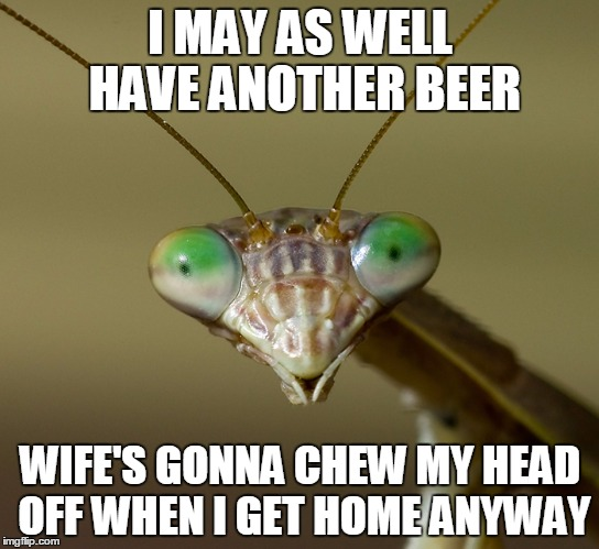 this should make front page. lol | I MAY AS WELL HAVE ANOTHER BEER WIFE'S GONNA CHEW MY HEAD OFF WHEN I GET HOME ANYWAY | image tagged in praying mantis head | made w/ Imgflip meme maker