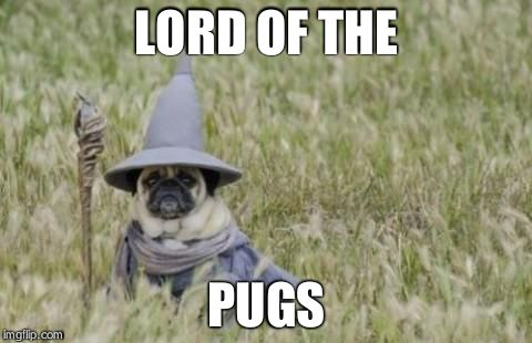 Wizard Pug | LORD OF THE PUGS | image tagged in wizard pug | made w/ Imgflip meme maker
