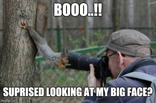 Jehovas Witness Squirrel Meme | BOOO..!! SUPRISED LOOKING AT MY BIG FACE? | image tagged in memes,jehovas witness squirrel | made w/ Imgflip meme maker
