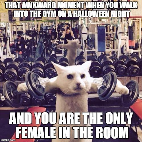 That Awkward Moment Cat Meme