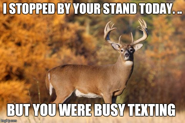 whitetail deer | I STOPPED BY YOUR STAND TODAY. .. BUT YOU WERE BUSY TEXTING | image tagged in whitetail deer | made w/ Imgflip meme maker