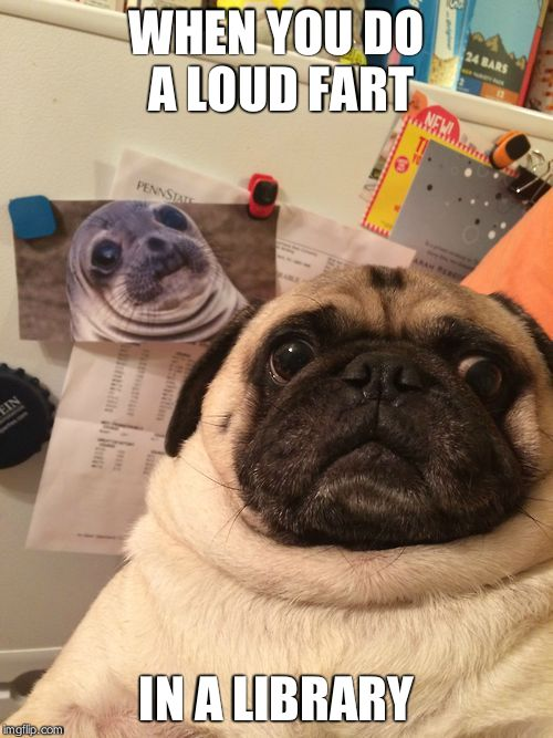 Awkward moment pug | WHEN YOU DO A LOUD FART IN A LIBRARY | image tagged in awkward moment pug | made w/ Imgflip meme maker