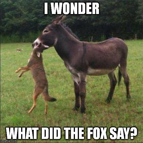 ouch! | I WONDER WHAT DID THE FOX SAY? | image tagged in what does the fox say | made w/ Imgflip meme maker