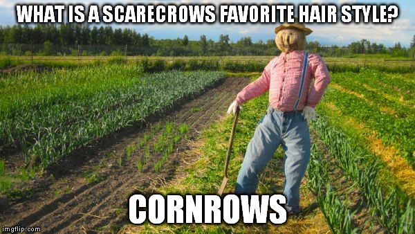 The outstanding scarecrow | WHAT IS A SCARECROWS FAVORITE HAIR STYLE? CORNROWS | image tagged in scarecrow,pun,bad pun,bad puns,funny,joke | made w/ Imgflip meme maker