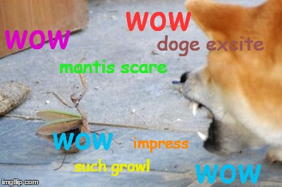 doge excite wow | made w/ Imgflip meme maker
