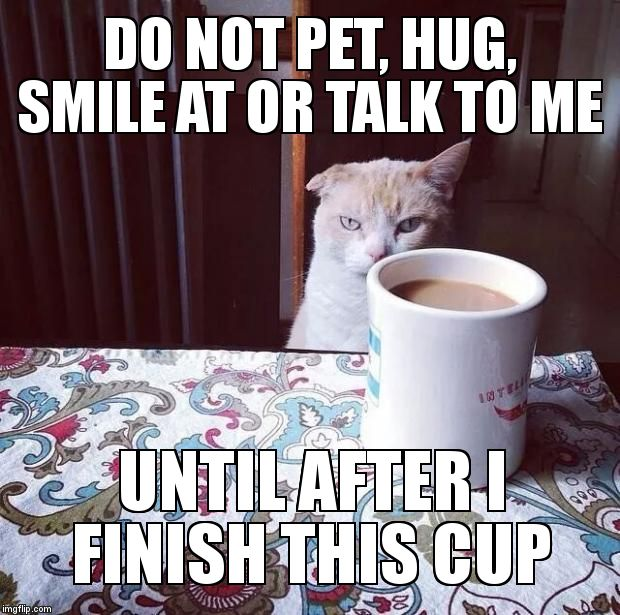Not a (morning) person | DO NOT PET, HUG, SMILE AT OR TALK TO ME UNTIL AFTER I FINISH THIS CUP | image tagged in cat doesn't like this coffee | made w/ Imgflip meme maker