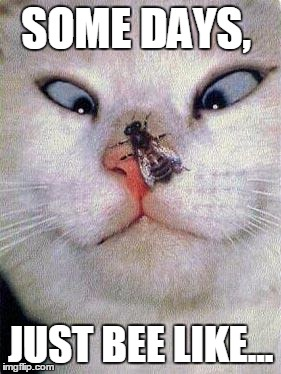 now what | SOME DAYS, JUST BEE LIKE... | image tagged in funny cat,cat,bees,pun | made w/ Imgflip meme maker