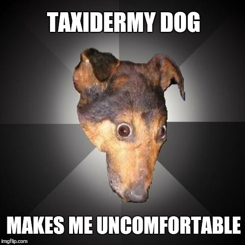 Depression Dog | TAXIDERMY DOG MAKES ME UNCOMFORTABLE | image tagged in memes,depression dog | made w/ Imgflip meme maker