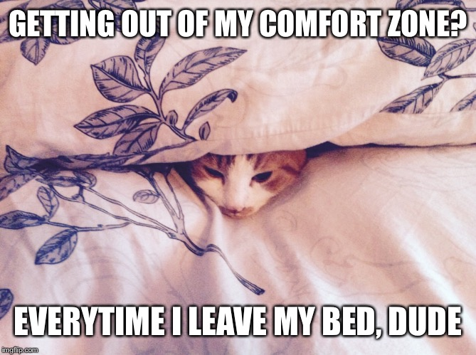 Getting out of my comfort zone | GETTING OUT OF MY COMFORT ZONE? EVERYTIME I LEAVE MY BED, DUDE | image tagged in cats,comfort,bed | made w/ Imgflip meme maker