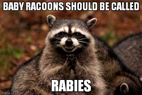 tm7qg evil plotting raccoon meme imgflip