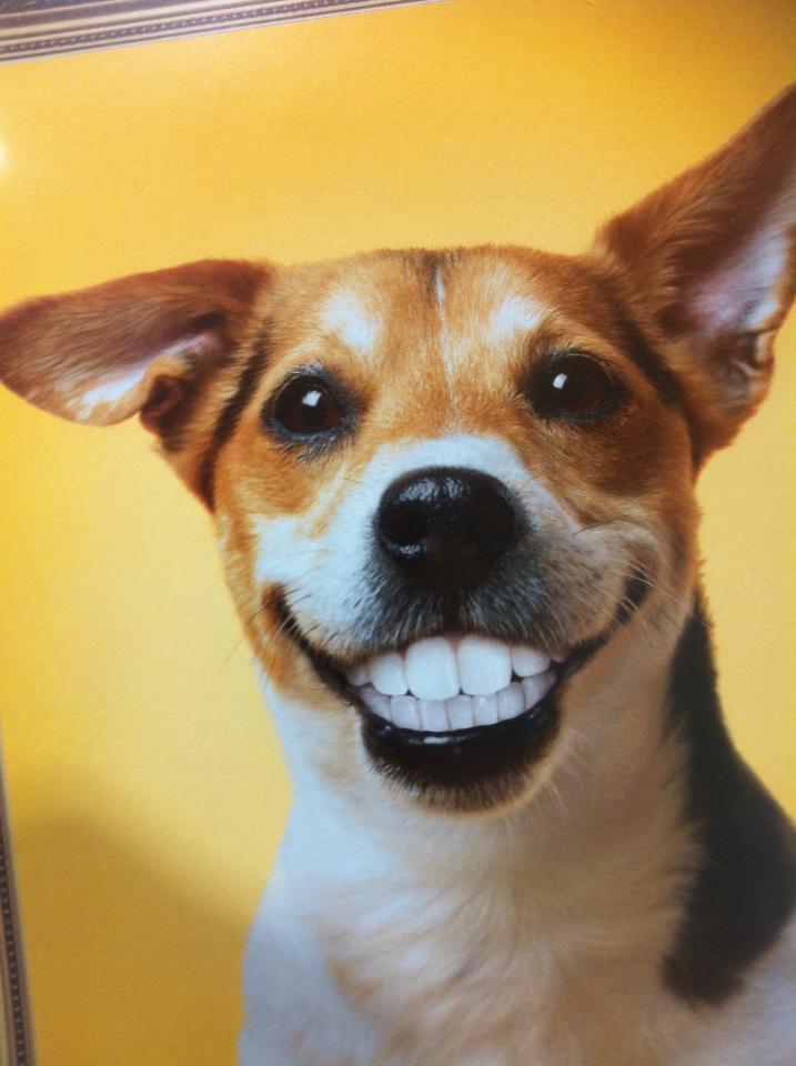 Happy Hot Dog Maker