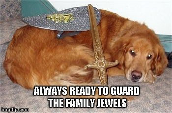ALWAYS READY TO GUARD THE FAMILY JEWELS | image tagged in guard dog | made w/ Imgflip meme maker