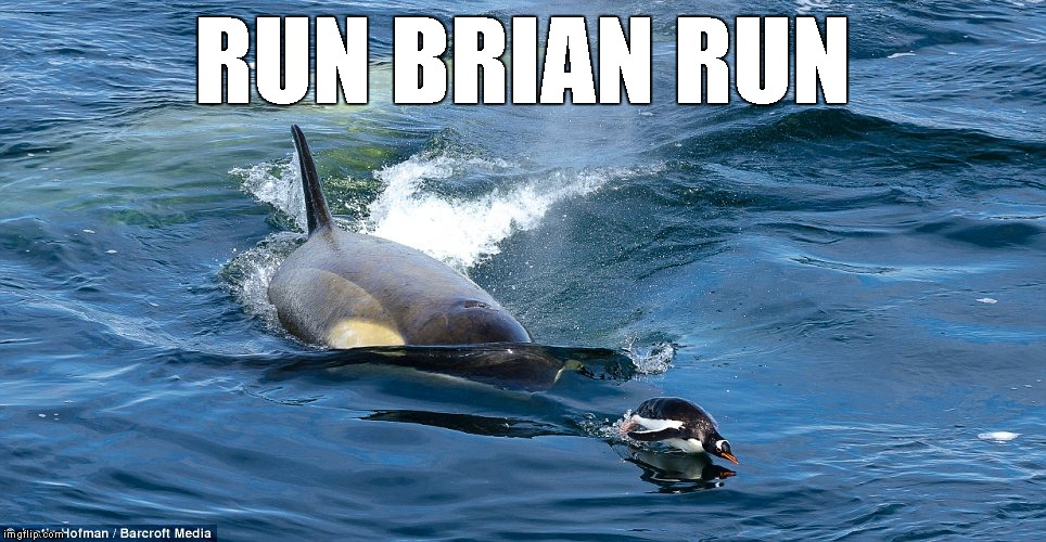 RUN BRIAN RUN | image tagged in killer whale chasing penguin | made w/ Imgflip meme maker