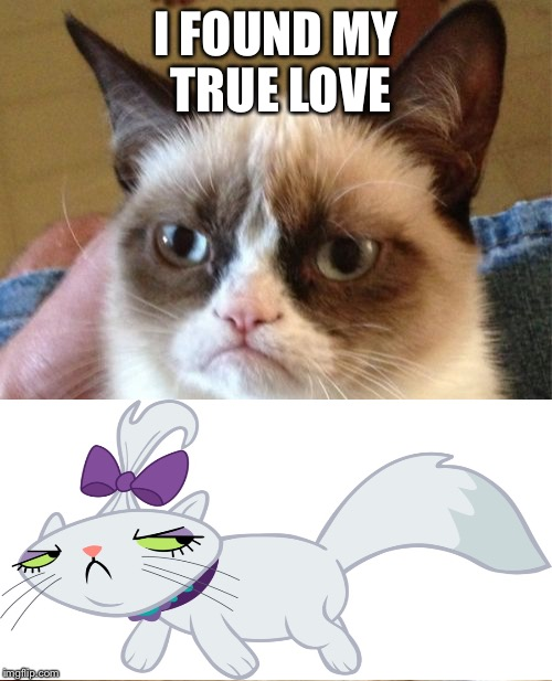 Grumpy cat love story  | I FOUND MY TRUE LOVE | image tagged in memes,grumpy cat,my little pony | made w/ Imgflip meme maker