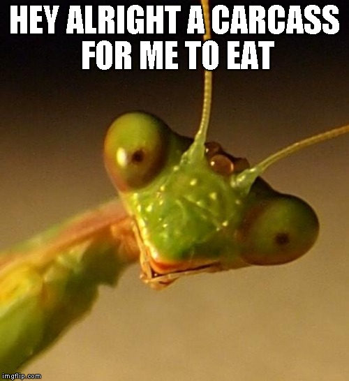 Mantis Face | HEY ALRIGHT A CARCASS FOR ME TO EAT | image tagged in mantis face | made w/ Imgflip meme maker
