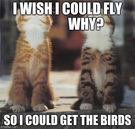 cats looking up | I WISH I COULD FLY              WHY? SO I COULD GET THE BIRDS | image tagged in cats looking up | made w/ Imgflip meme maker