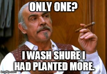 connery 2 | ONLY ONE? I WASH SHURE I HAD PLANTED MORE. | image tagged in connery 2 | made w/ Imgflip meme maker