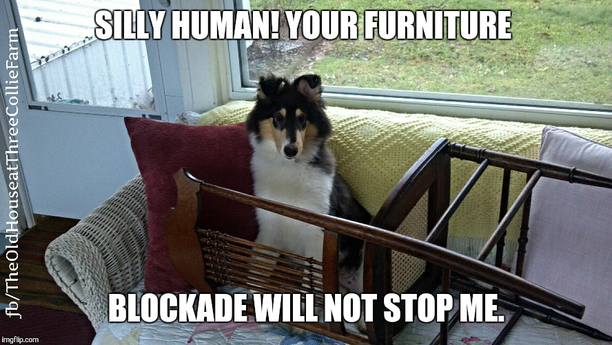 Furniture Blockade  | SILLY HUMAN! YOUR FURNITURE BLOCKADE WILL NOT STOP ME. | image tagged in cute puppy,dogs | made w/ Imgflip meme maker