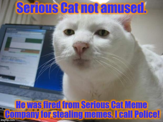 Serious Cat | Serious Cat not amused. He was fired from Serious Cat Meme Company for stealing memes. I call Police! | image tagged in serious cat | made w/ Imgflip meme maker
