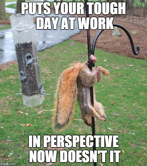 txk4y squirrel nuts meme generator imgflip,Squirrel Meme Nuts