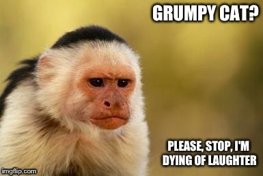 Grumpy Capuchin | GRUMPY CAT? PLEASE, STOP, I'M DYING OF LAUGHTER | image tagged in grumpy capuchin | made w/ Imgflip meme maker