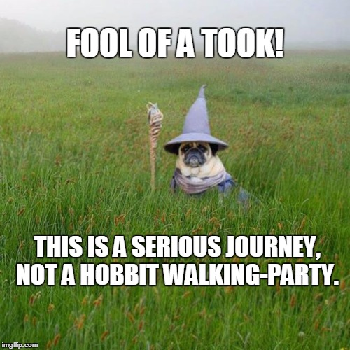 Fool of a Took | FOOL OF A TOOK! THIS IS A SERIOUS JOURNEY, NOT A HOBBIT WALKING-PARTY. | image tagged in pugdalf,memes | made w/ Imgflip meme maker