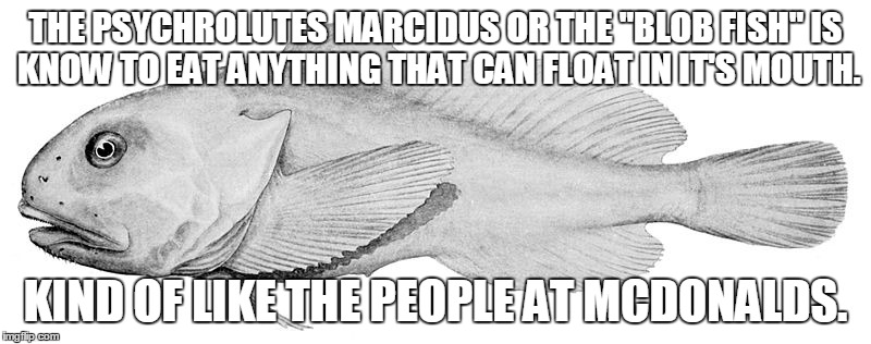 "Do you see the similarities? | THE PSYCHROLUTES MARCIDUS OR THE ""BLOB FISH""IS KNOW TO EAT ANYTHING THAT CAN FLOAT IN IT'S MOUTH. KIND OF LIKE THE PEOPLE AT MCDONALDS. 