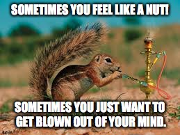 SOMETIMES YOU FEEL LIKE A NUT! SOMETIMES YOU JUST WANT TO GET BLOWN OUT OF YOUR MIND. | image tagged in squirrel,stoned | made w/ Imgflip meme maker