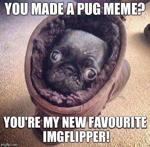 Pug Ugg | YOU MADE A PUG MEME? YOU'RE MY NEW FAVOURITE IMGFLIPPER! | image tagged in pug ugg | made w/ Imgflip meme maker