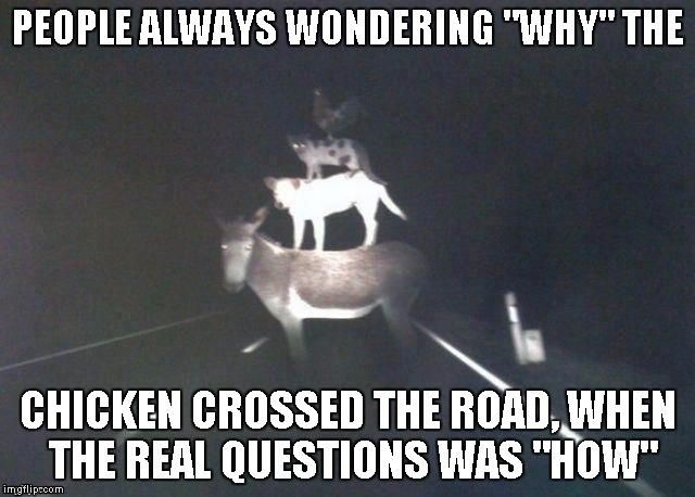 "Sometimes there's even more bizarre questions out there.. | PEOPLE ALWAYS WONDERING ""WHY"" THE CHICKEN CROSSED THE ROAD, WHEN THE REAL QUESTIONS WAS ""HOW"" 