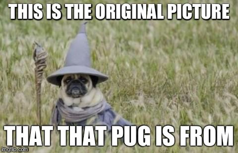 Wizard Pug | THIS IS THE ORIGINAL PICTURE THAT THAT PUG IS FROM | image tagged in wizard pug | made w/ Imgflip meme maker