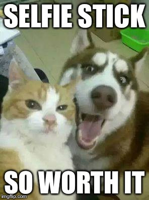 Selfie Sticks | SELFIE STICK SO WORTH IT | image tagged in catdogselfie,memes,selfie | made w/ Imgflip meme maker