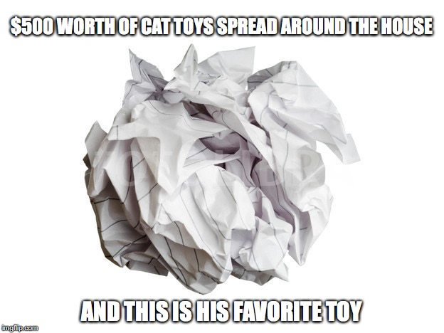 The $500 cat toy | $500 WORTH OF CAT TOYS SPREAD AROUND THE HOUSE AND THIS IS HIS FAVORITE TOY | image tagged in cats | made w/ Imgflip meme maker