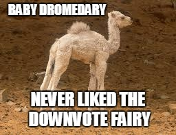 BABY DROMEDARY NEVER LIKED THE DOWNVOTE FAIRY | made w/ Imgflip meme maker