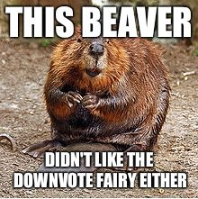 Beaver | THIS BEAVER DIDN'T LIKE THE DOWNVOTE FAIRY EITHER | image tagged in beaver | made w/ Imgflip meme maker