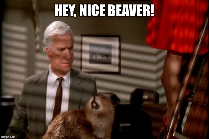 HEY, NICE BEAVER! | made w/ Imgflip meme maker
