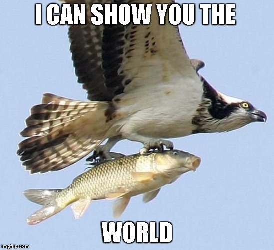 look fish the front page | I CAN SHOW YOU THE WORLD | image tagged in fish,hawk | made w/ Imgflip meme maker