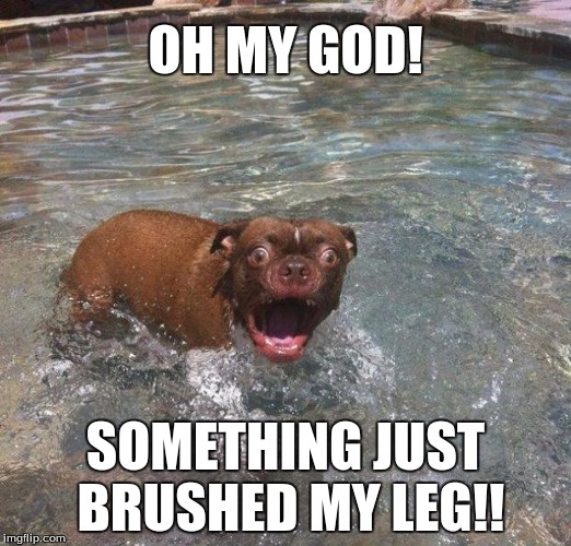 OH MY GOD! SOMETHING JUST BRUSHED MY LEG!! | image tagged in funny,swimming,animals,dogs,scared | made w/ Imgflip meme maker