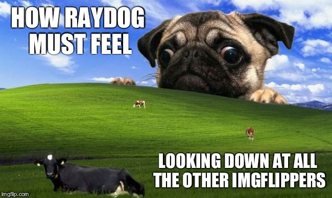 This is NOT actually how he feels, but I like this template too much as to not submit it. | LOOKING DOWN AT ALL THE OTHER IMGFLIPPERS HOW RAYDOG MUST FEEL | image tagged in pug windows hill | made w/ Imgflip meme maker
