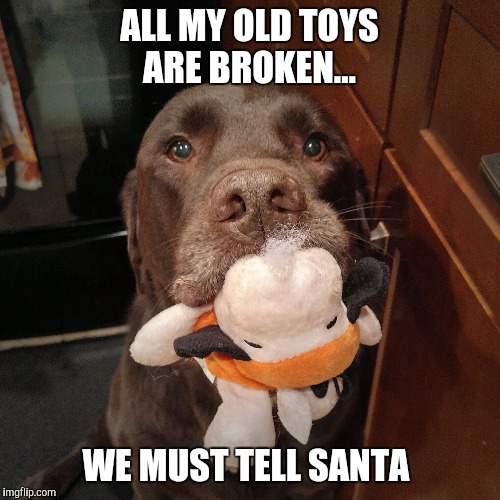 Tell Santa  | ALL MY OLD TOYS ARE BROKEN... WE MUST TELL SANTA | image tagged in chuckie the chocolate lab,santa,funny,labrador,dog,christmas | made w/ Imgflip meme maker