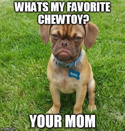Grumpy dog | WHATS MY FAVORITE CHEWTOY? YOUR MOM | image tagged in grumpy dog,memes,funny animals | made w/ Imgflip meme maker