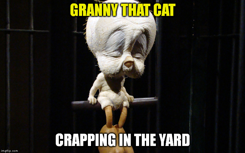 GRANNY THAT CAT CRAPPING IN THE YARD | made w/ Imgflip meme maker