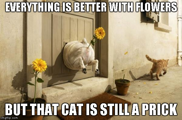 Dog Vs Cat....the battle continues | EVERYTHING IS BETTER WITH FLOWERS BUT THAT CAT IS STILL A PRICK | image tagged in dog vs cat,funny animals,funny,dog,cat | made w/ Imgflip meme maker