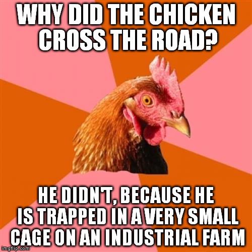 Anti Joke Chicken | WHY DID THE CHICKEN CROSS THE ROAD? HE DIDN'T, BECAUSE HE IS TRAPPED IN A VERY SMALL CAGE ON AN INDUSTRIAL FARM | image tagged in memes,anti joke chicken,farm animals,bad joke chicken,why the chicken cross the road | made w/ Imgflip meme maker
