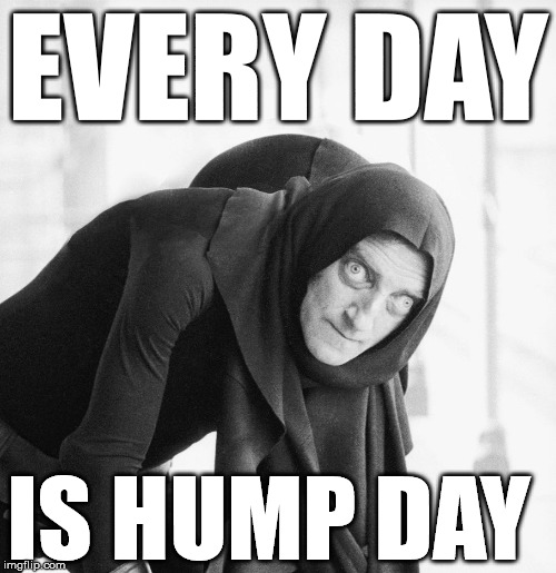 yes master | EVERY DAY IS HUMP DAY | image tagged in hump day | made w/ Imgflip meme maker