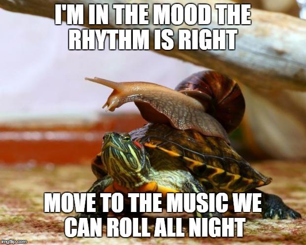 uhg3d snail on a turtle meme generator imgflip,Turtle Meme Generator